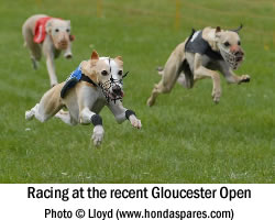 Whippet Racing