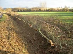 Hedgelaying competition